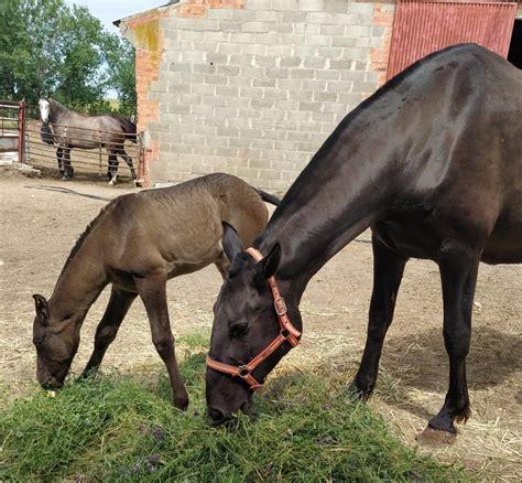 La imagen del día: la yegua Rocío con su potrillo Timbal ...