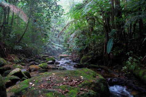 La importancia de cuidar nuestro medio ambiente   Honduras ...
