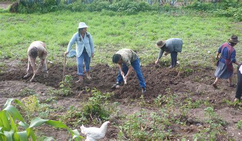 La importancia de la Agricultura Familiar   Confederación ...