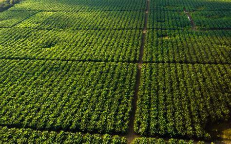 La importancia de la agricultura irrigada y el uso ...
