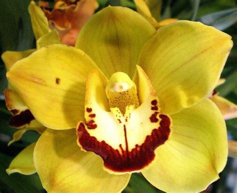 La importancia de las Orquídeas en el Medio Ambiente :D ...