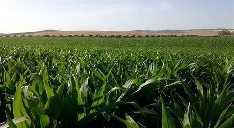 La importancia del riego de precisión en la agricultura de ...