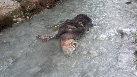 La Jornada: Acusan a minera de contaminar el agua en la ...