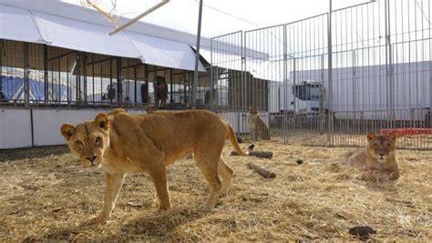 La ley que prohíbe circos con animales entra en vigor en ...