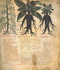 La mandrágora  Maquiavelo    Wikipedia, la enciclopedia libre