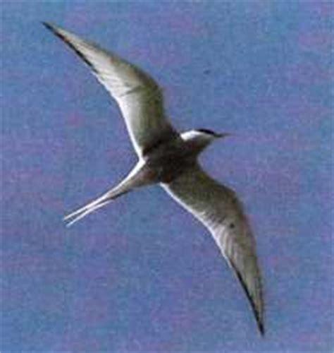 La maravillosa migración de las aves   ComoCriar.org