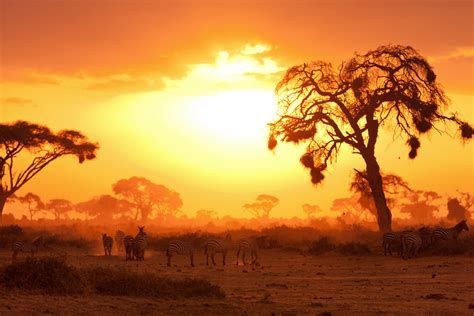 La mejor época para ir de safari a Kenia y Tanzania   Los ...