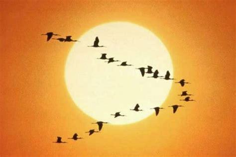 La Migración de las Aves   ¿Por qué lo hacen? ¿Dónde van? ️