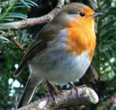 La Migracion de las Aves Porque Migran y Como? Rutas de ...