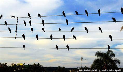 La música del los pájaros eléctricos   Desenchufados