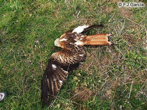La nueva Lista Roja Mundial de las Aves muestra un ...