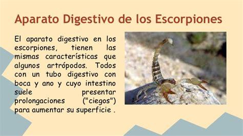 La nutrición del Escorpión