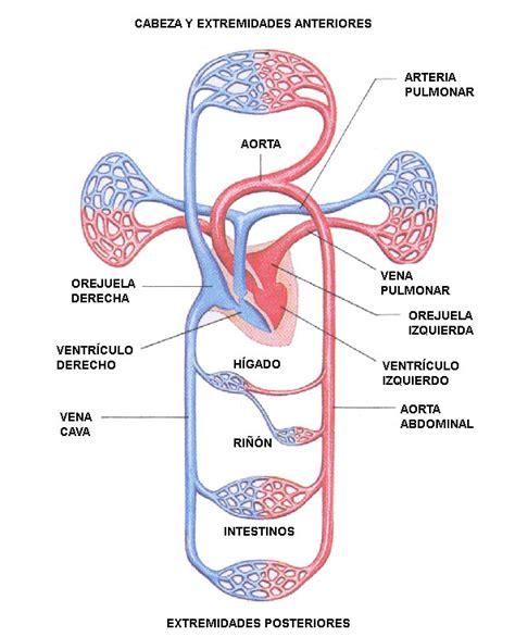 La nutrición: sistemas de órganos involucrados.: El ...