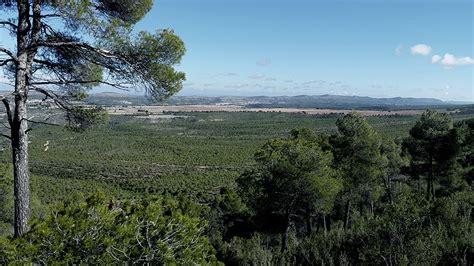 La ONU advierte sobre la degradación del bosque ...