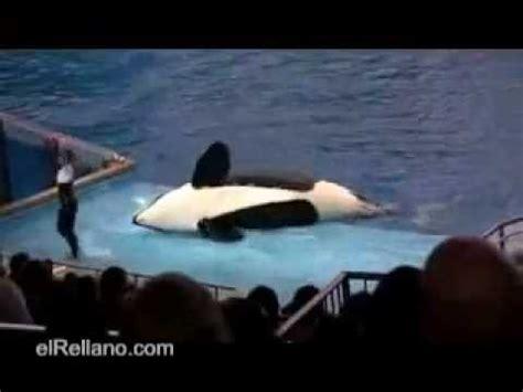 La Orca Asesina   YouTube