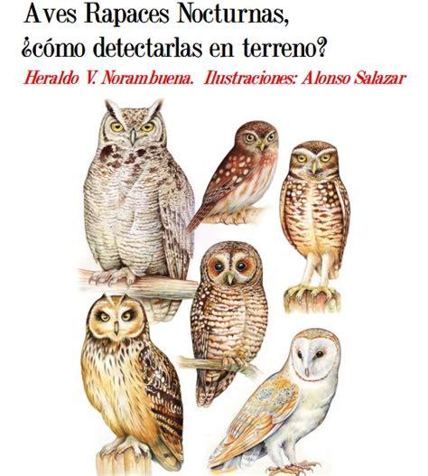 La pajarera del Comepancito: Aves Rapaces Nocturnas: ¿Cómo ...