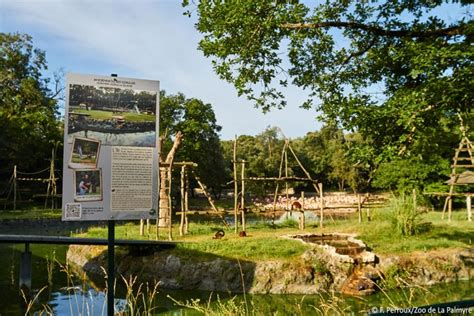 La Palmyre Zoo celebrates 50th anniversary! | Zoo de la ...