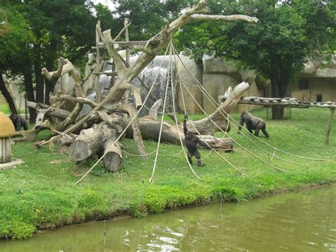 La Palmyre Zoo, in Charente Maritime   France For Families