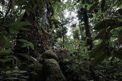 La paradoja de la selva tropical   Naukas
