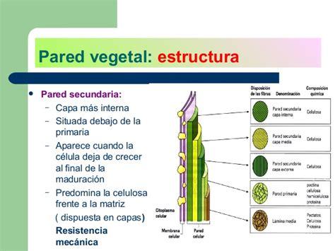 La pared vegetal
