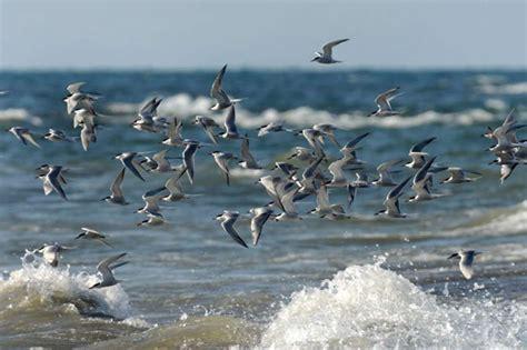 La pesca de palangre mata a 300.000 aves marinas en el ...