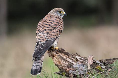 La presencia de aves rapaces un buen termómetro para ...