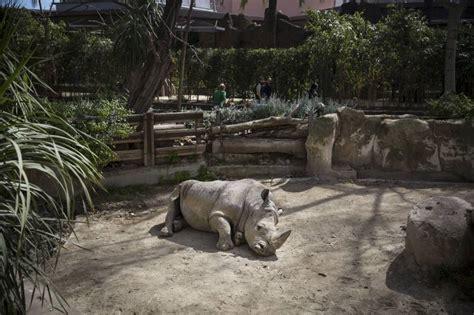 La pressió animalista aboca el Zoo de Barcelona a quedar ...