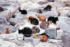 La Protectora detecta bolsas de veneno para matar gatos en ...