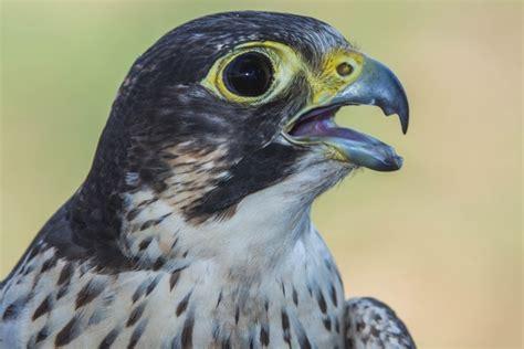 La provincia registra más de 220 aves rapaces para ...