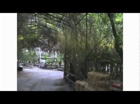 La Purificación,el Pica,Texcoco Edo de Mexico..mpg   YouTube