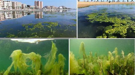 La recuperación del Mar Menor: un proceso  largo y muy ...