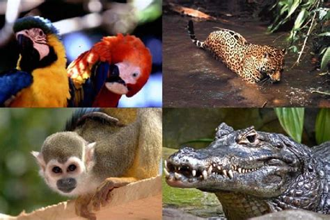 La Reserva Nacional Pacaya Samiria es reconocida como el ...