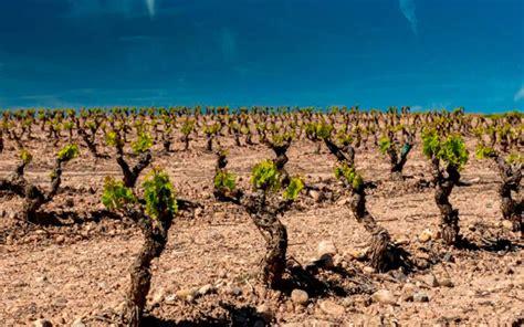 La Rioja apoyará la compra de uva de los viticultores con ...