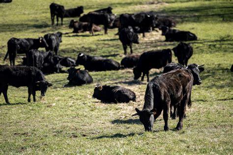 La Rioja recibirá 10,2 millones para programas agrícolas ...
