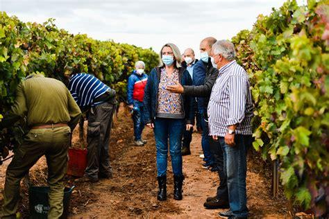 La Rioja suma 1.661 PCR a temporeros en vendimia con sólo ...
