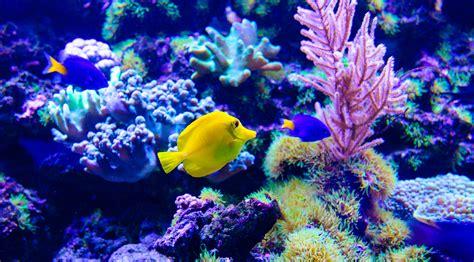 La roca viva en acuarios de arrecife o acuario con sólo ...