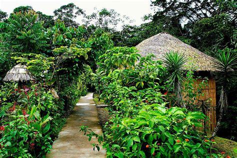 La Selva Amazon Eco Lodge Review   Amazon Rainforest ...