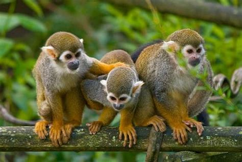 La selva Amazonica a un paso de Taraira | tarairavaupes