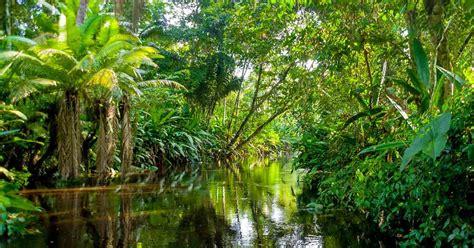 La selva Amazónica fue plantada por los indígenas