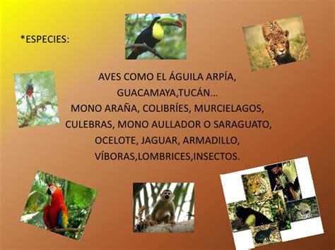 La selva húmeda y seca