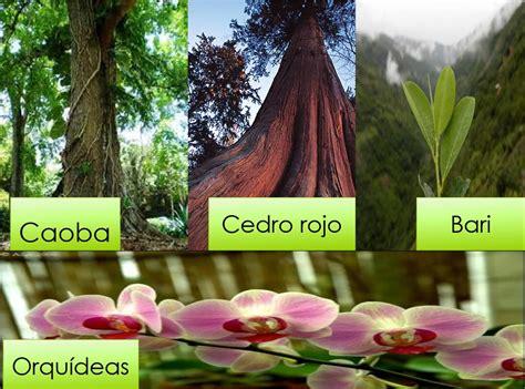 La Selva Lacandona: Administración de Recursos Naturales ...