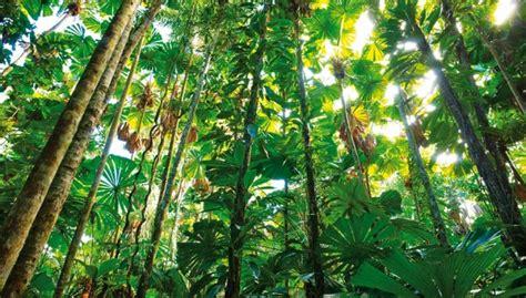 La selva tropical desciende un 62% en veinte años   HAZTE ECO