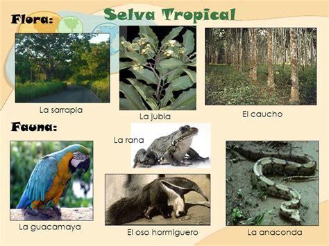 La Selva Tropical LUZ RONDON.   ppt video online descargar