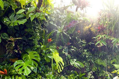 La selva tropical   Vanuatu