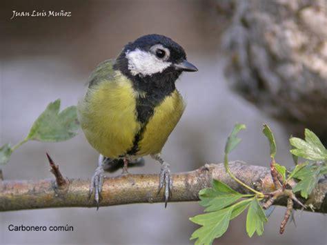 La Serranía Natural » Blog Archive » Pájaros insectívoros