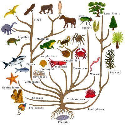 La singularidad biológica de la especie humana II. La ...