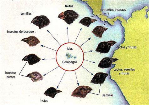 La teoria de evolución segun Darwin   Info   Taringa!