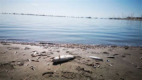 La última DANA mató al 80% de la fauna y flora del Mar ...
