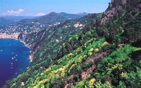 La vegetación mediterránea   Faddi Nassar   GreenArea.me