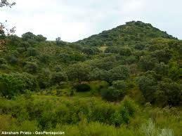 La vegetación típica es xerófila, ya que tiene que ...